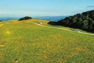 南顶草原风光美